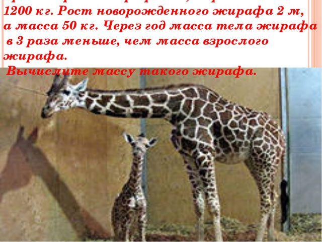 Средний рост жирафа 5м, а средняя масса 1200 кг. Рост новорожденного жирафа 2...