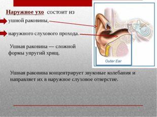 Наружное ухо состоит из ушной раковины, наружного слухового прохода. Ушная ра