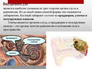 Внутреннее ухо является наиболее сложным из трех отделов органа слуха и равно