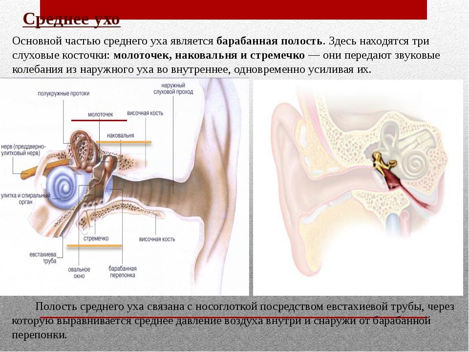 Среднее ухо Основной частью среднего уха является барабанная полость. Здесь н...