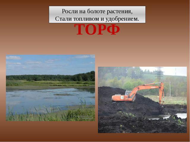 Росли на болоте растения, Стали топливом и удобрением. ТОРФ