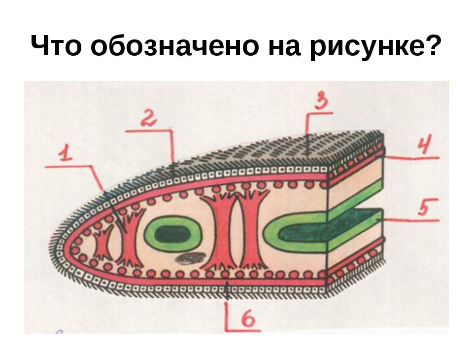 Что обозначено на рисунке?