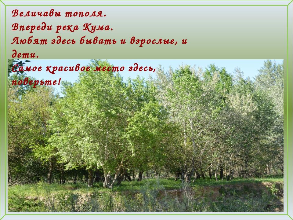 Величавы тополя. Впереди река Кума. Любят здесь бывать и взрослые, и дети. Са...