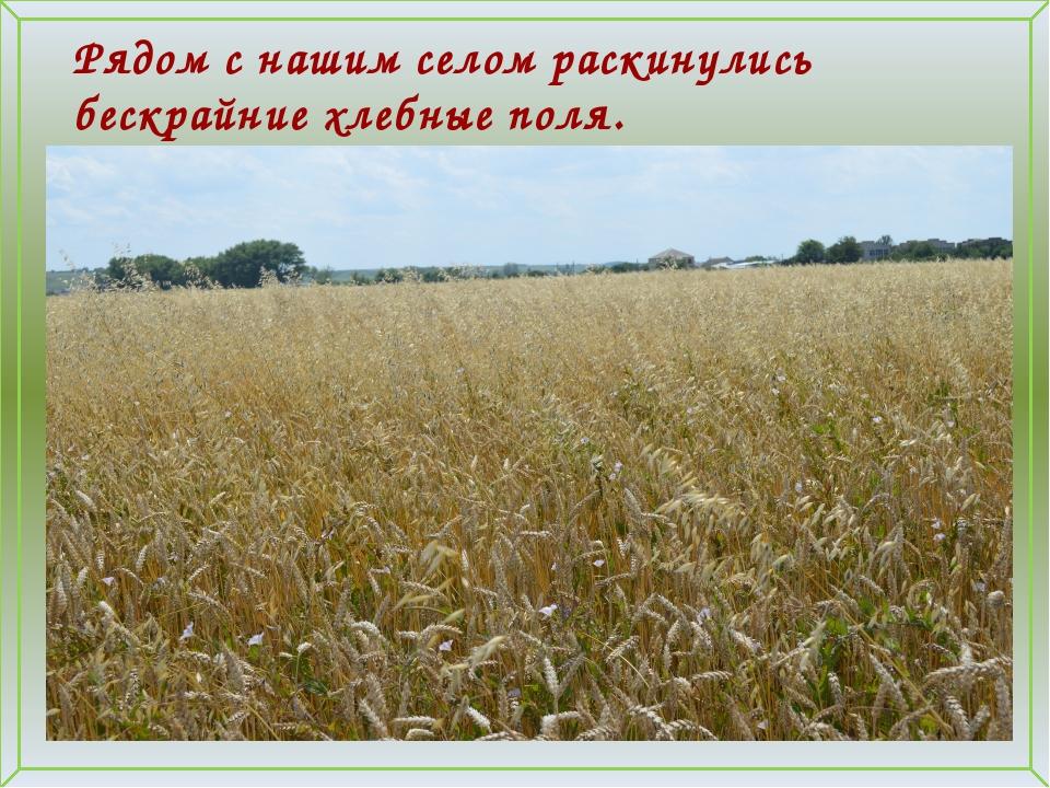 Рядом с нашим селом раскинулись бескрайние хлебные поля.