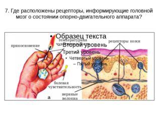 7. Где расположены рецепторы, информирующие головной мозг о состоянии опорно-