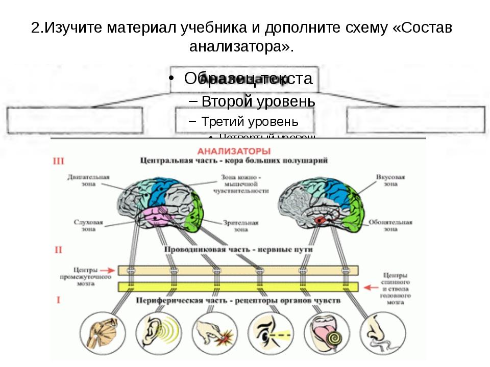 2.Изучите материал учебника и дополните схему «Состав анализатора».