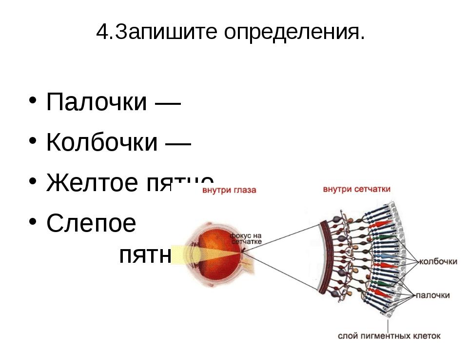 4.Запишите определения. Палочки — Колбочки — Желтое пятно – Слепое пятно -