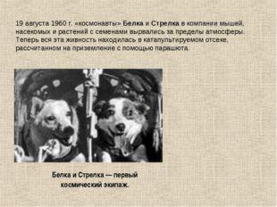 19 августа 1960 г. «космонавты» Белка и Стрелка в компании мышей, насекомых и