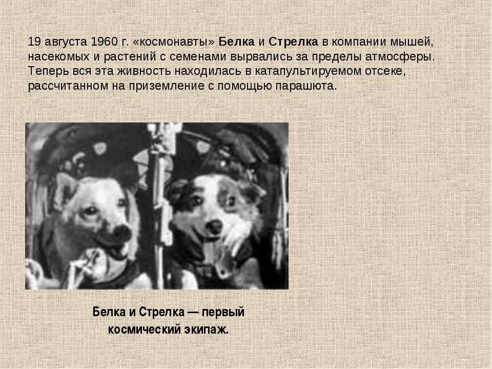 19 августа 1960 г. «космонавты» Белка и Стрелка в компании мышей, насекомых и...
