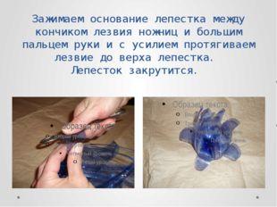 Зажимаем основание лепестка между кончиком лезвия ножниц и большим пальцем ру