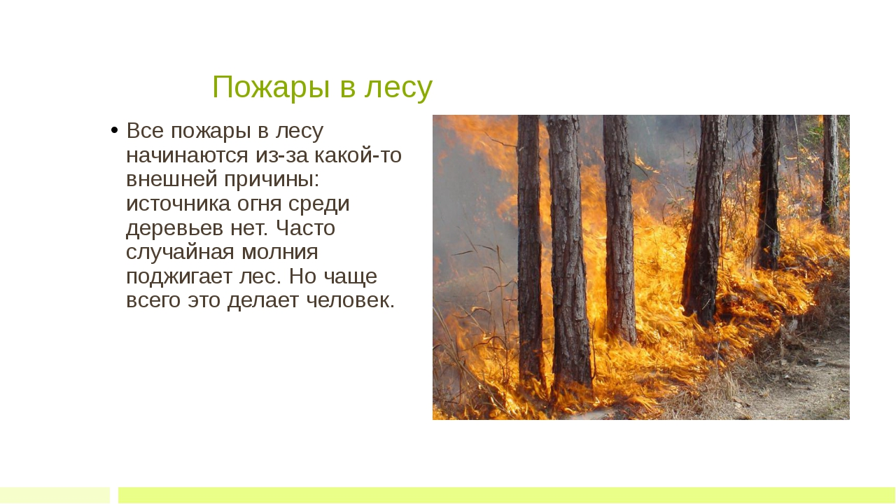 Пожары в лесу Все пожары в лесу начинаются из-за какой-то внешней причины:...
