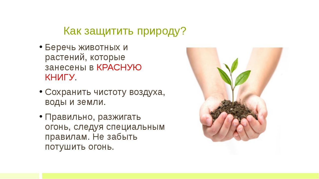 Как защитить природу? Беречь животных и растений, которые занесены в КРАСНУ...