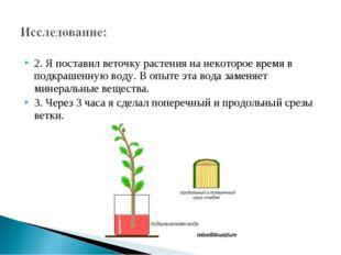2. Я поставил веточку растения на некоторое время в подкрашенную воду. В опыт