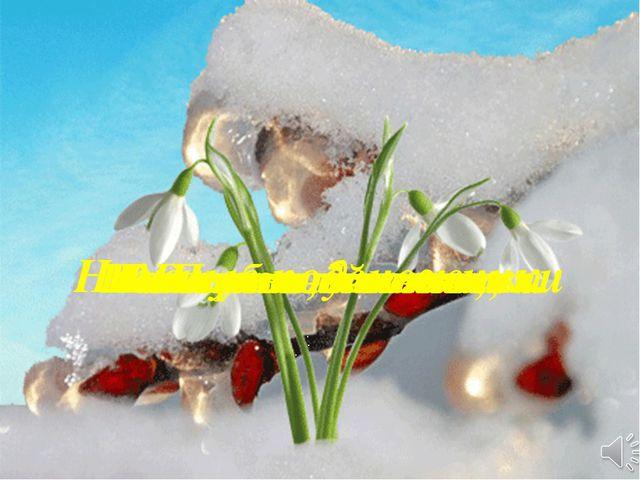 Нежные подснежники На лесной поляне Распустили лепестки После зимней спячки Г...
