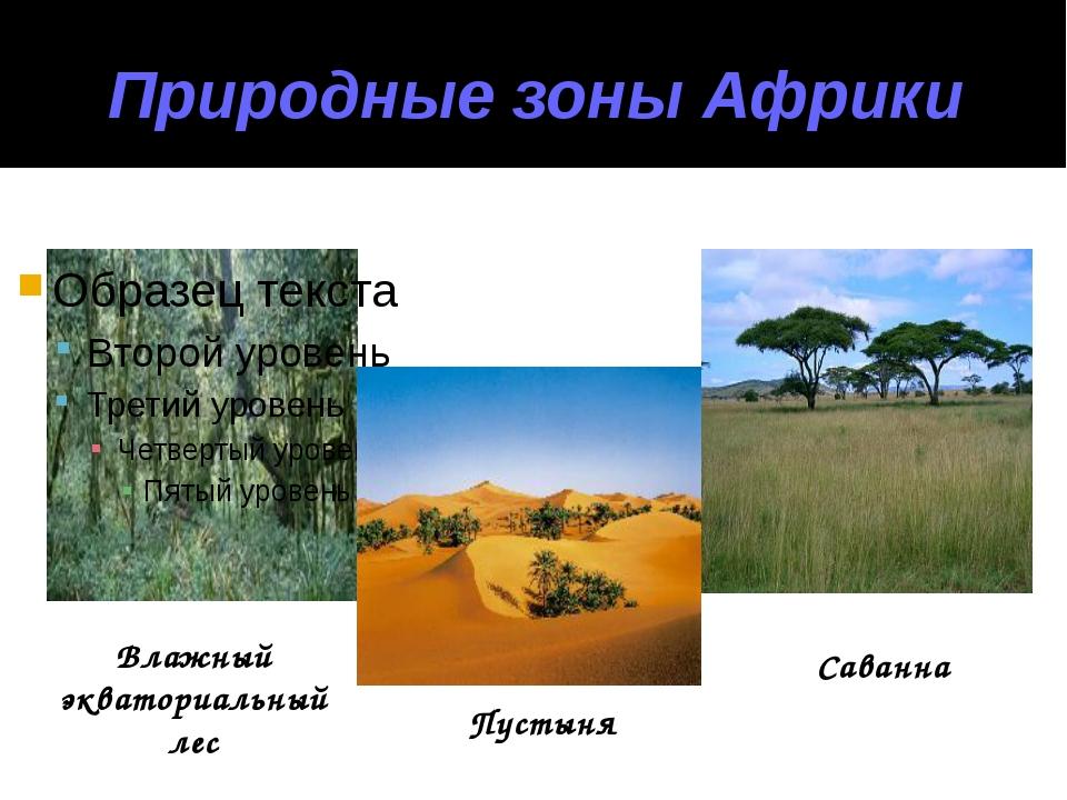Природные зоны Африки Влажный экваториальный лес Пустыня Саванна