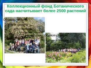 Коллекционный фонд Ботанического сада насчитывает более 2500 растений