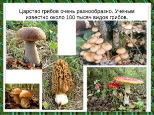 Царство грибов очень разнообразно. Учёным известно около 100 тысяч видов гриб