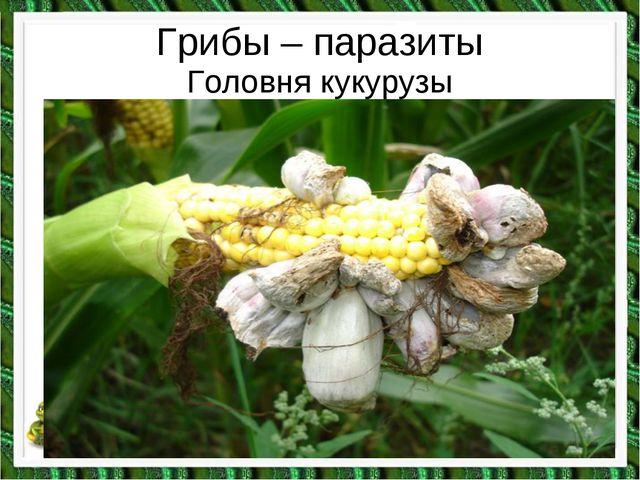 Грибы – паразиты Головня кукурузы