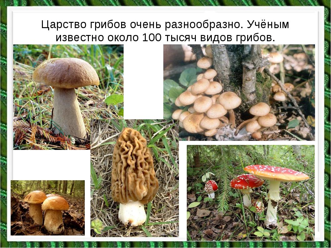 Царство грибов очень разнообразно. Учёным известно около 100 тысяч видов гриб...