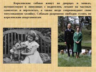 Королевские собаки живут во дворцах и замках, путешествуют в лимузинах с вод