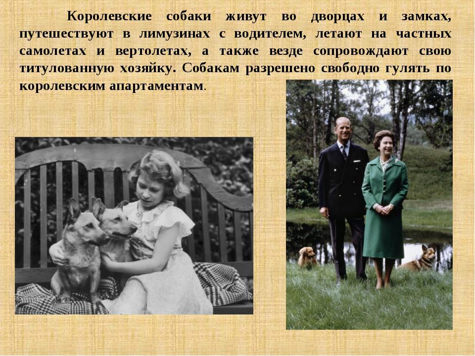 Королевские собаки живут во дворцах и замках, путешествуют в лимузинах с вод...