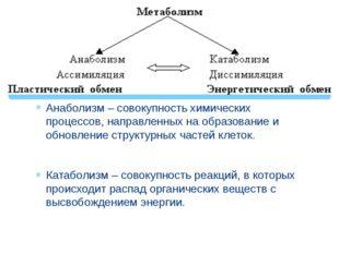 Анаболизм – совокупность химических процессов, направленных на образование и