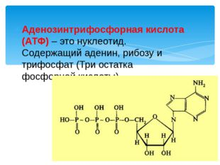 Аденозинтрифосфорная кислота (АТФ) – это нуклеотид. Содержащий аденин, рибозу