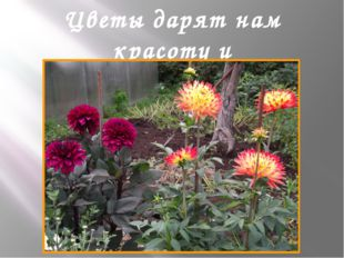 Цветы дарят нам красоту и вдохновляют нас на творчество