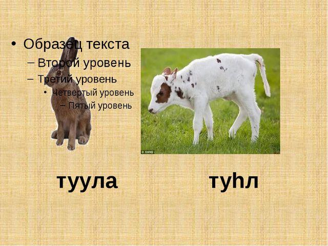туула туhл