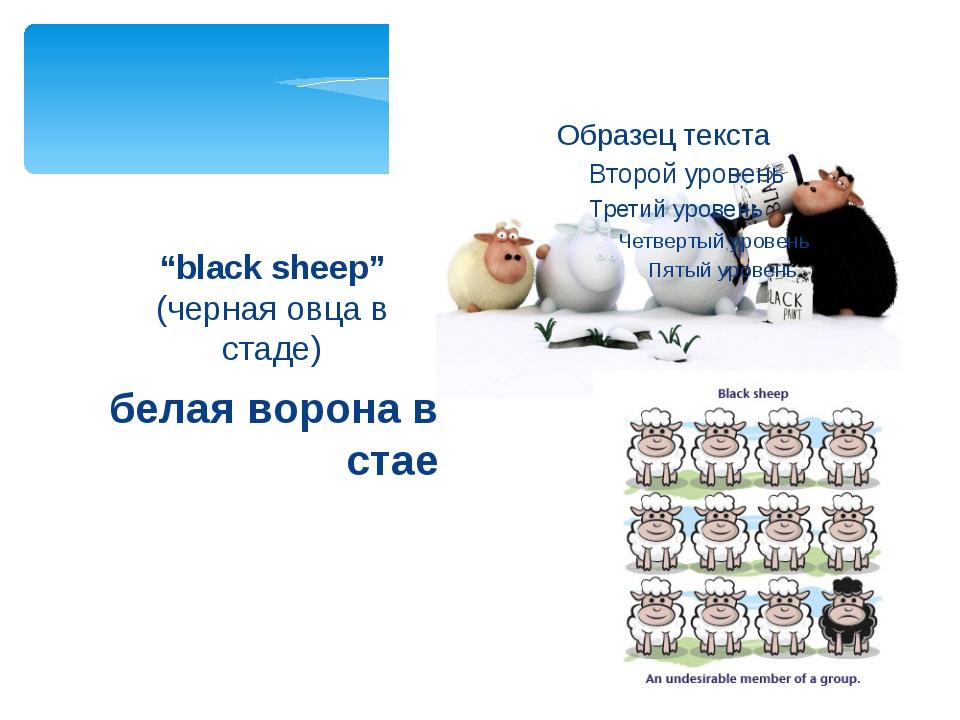 """белая ворона в стае """"black sheep"""" (черная овца в стаде)"""