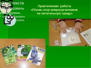 Практическая работа: «Посев спор микроорганизмов на питательную среду»