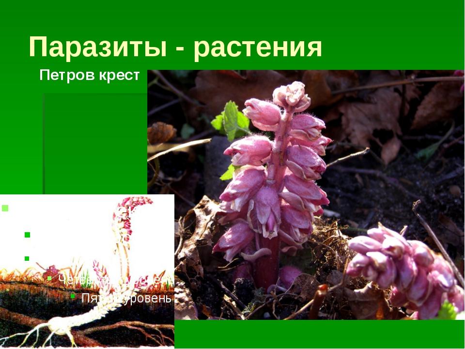 Паразиты - растения Петров крест