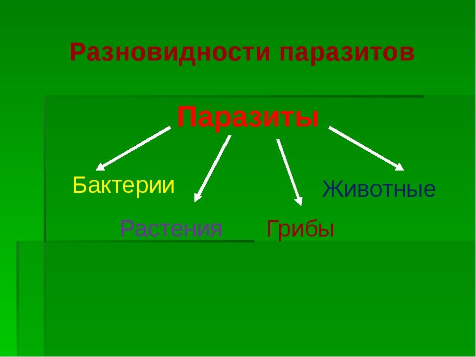 Разновидности паразитов Паразиты Бактерии Растения Грибы Животные