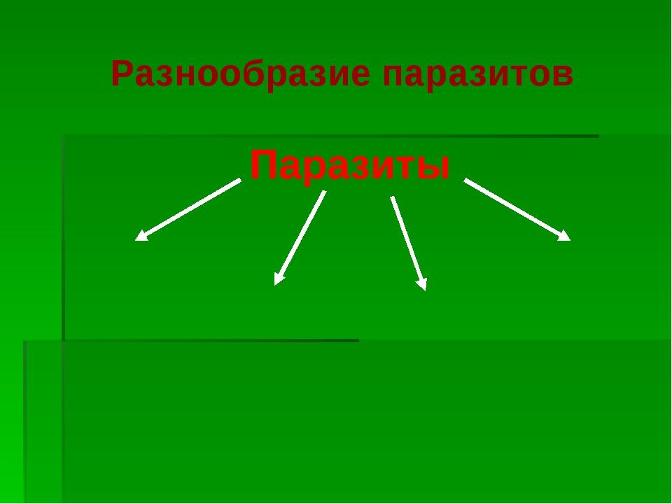Разнообразие паразитов Паразиты