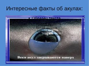 Интересные факты об акулах: