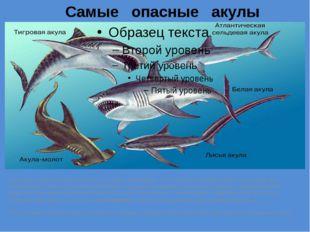 Самые опасные акулы Каких акул надо бояться? Ихтиологи и ученые утверждают ,