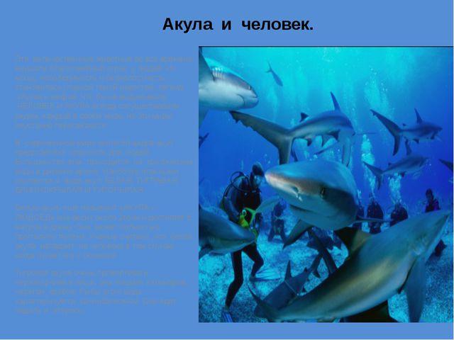 Акула и человек. Эти величественные животные во все времена внушали благогове...