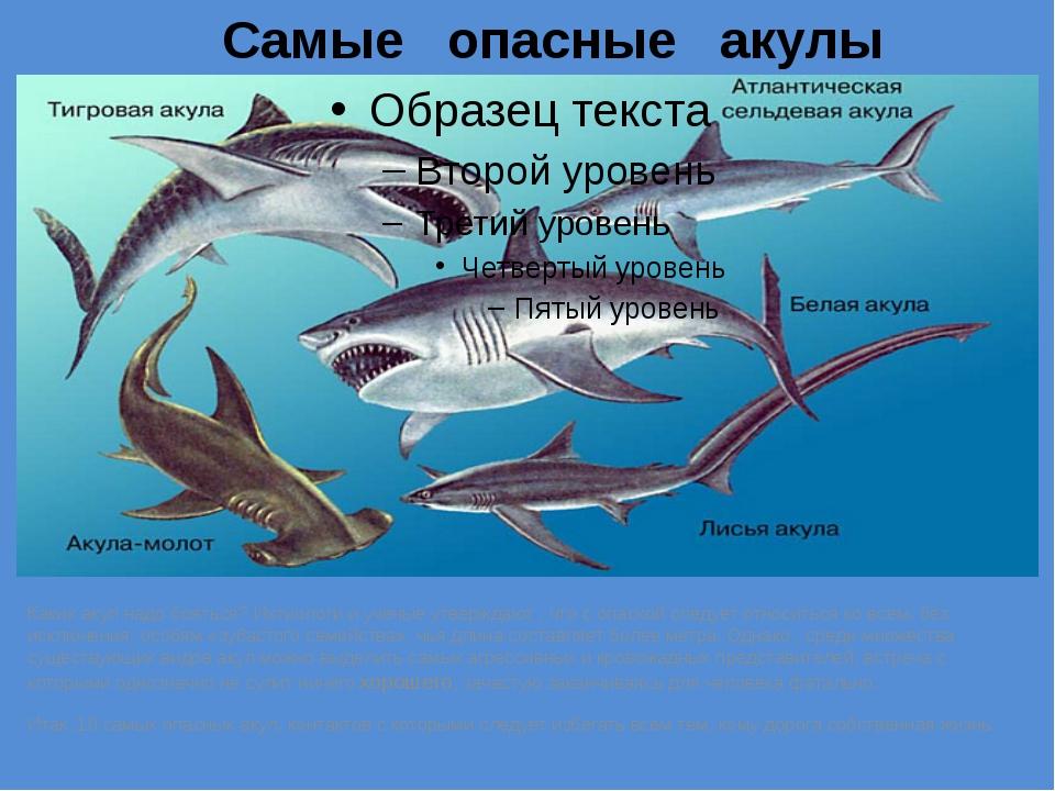 Самые опасные акулы Каких акул надо бояться? Ихтиологи и ученые утверждают ,...