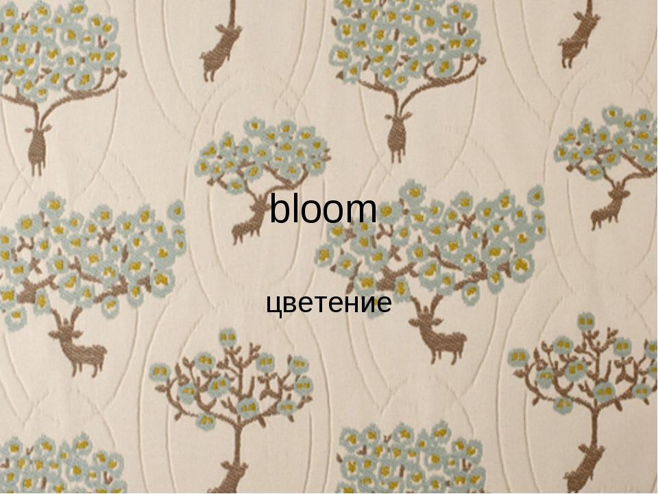 bloom цветение