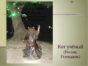 Кот учёный (Россия, Геленджик)