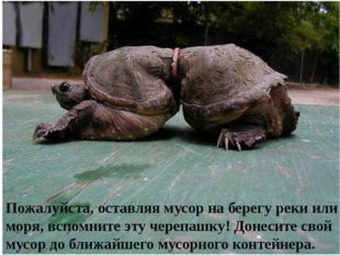 Пожалуйста, оставляя мусор на берегу реки или моря, вспомните эту черепашку!