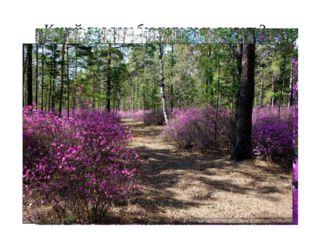 Какой лес вам бы хотелось видеть?
