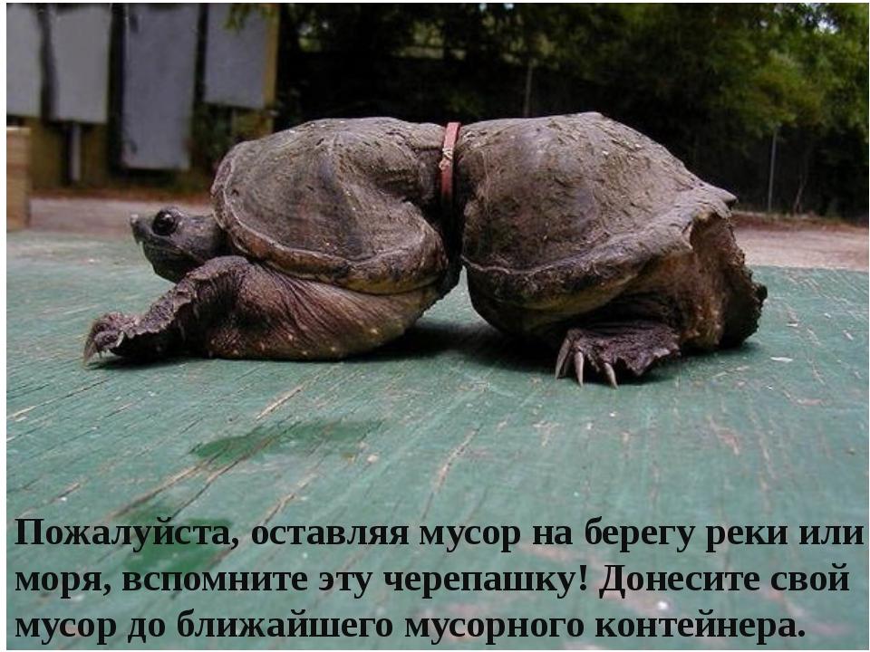 Пожалуйста, оставляя мусор на берегу реки или моря, вспомните эту черепашку!...