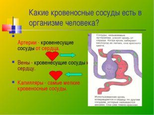 Какие кровеносные сосуды есть в организме человека? Артерии - кровенесущие со