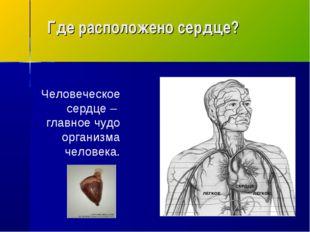 Где расположено сердце? Человеческое сердце – главное чудо организма человека.