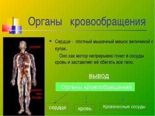 Органы кровообращения Сердце - плотный мышечный мешок величиной с кулак. Оно