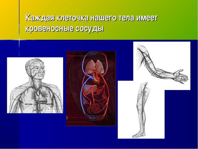 Каждая клеточка нашего тела имеет кровеносные сосуды