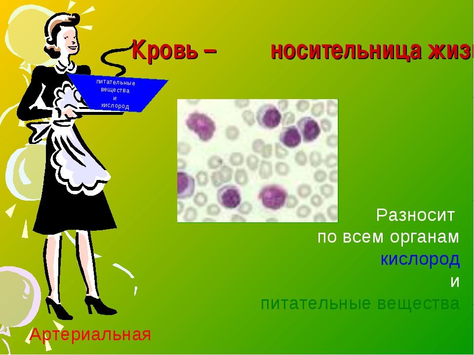 Кровь – носительница жизни питательные вещества и кислород Разносит по всем...