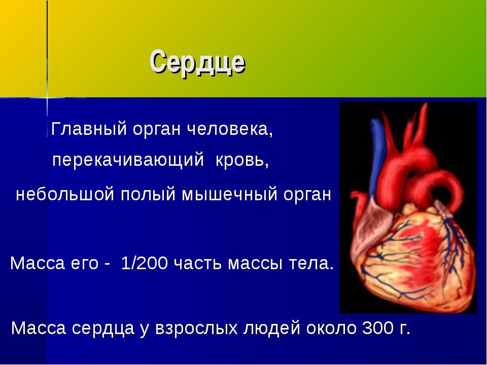 Сердце Главный орган человека, перекачивающий кровь, небольшой полый мышечны...