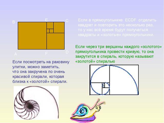 A B C E F D Если в прямоугольнике ECDF отделить квадрат и повторить это неско...
